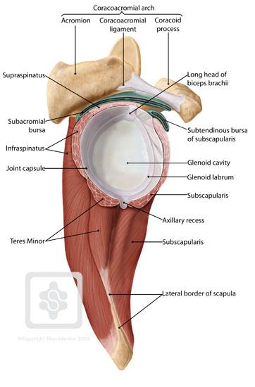 Jäätynyt olkapään (adhesiivinen kapsuliitti) tyypilliset oireet - Subacromial Bursa
